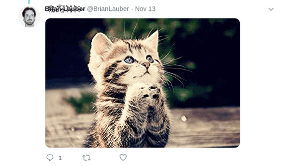 Image: a kitten that looks like it's praying